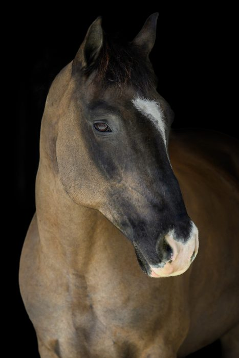 clipped black horse on black background